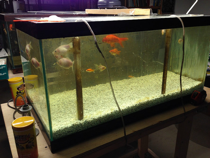 Aquarium Filtration Using Smithers Oasis Engineered Product