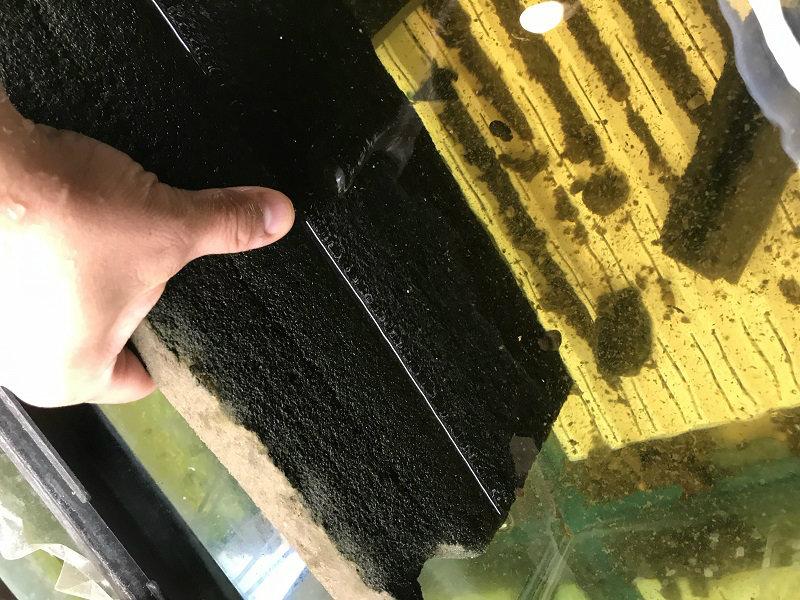 foam to filter